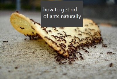 How To Get Rid Of Ants In Your Bathroom 28 Images How To Naturally Get Rid Of Ants In Your