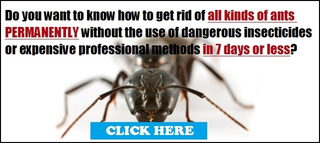 What Can You Use To Get Rid Of Ants Naturally